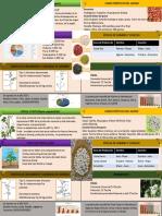 Infografia de Phaseolus Vulgaris