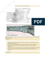 Dicot Leaf Stracture