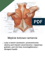mięsnie tułowia.pdf