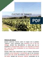 Cultivo de Tabaco PDF