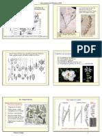 18_19_Angiospermas_diapos.pdf