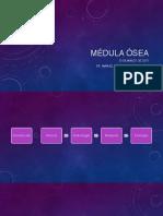 MÉDULA-ÓSEA