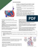 EsquemaAnatomiadelCorazon.docx