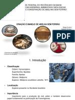 Apresentação de Meliponicultura - Disciplina Manejo de Abelhas Sem Ferrão UFRB