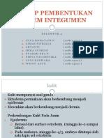 4. Embriologi Sistem Integumen