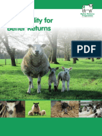 Ewe Fertility for Better Returns