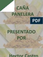 PRESENTACIÓN DE CAÑA DE AZÚCAR