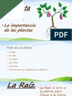 Disertacion Las Plantas