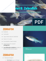 Chapter 8 - Zebrafish