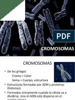 Cromosomas, Ciclo Celular