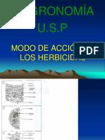 Informe_hortalizas