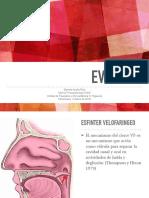EVF-E-IVF-FINAL