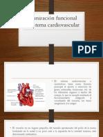 Organización Funcional Del Sistema Cardiovascular