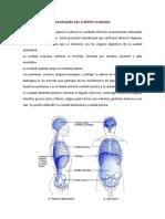 Anatomía Tercera Semana