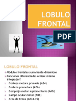 7. Lobulo Frontal (6)