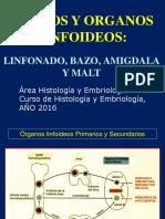 tejido linfoideo
