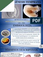 Embriogénesis Temprana b1