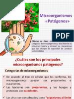 Microorganismos 1