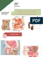 17. Fungsi Prostat, Vesikula Seminalis