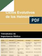 Ciclos Evolutivos de Los Helmintos