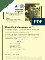 Biodiesel Higuerilla