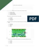 Latihan Struktur Tumbuhan 1