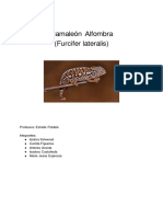 Camaleón Alfombra