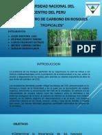 bosque-tropical.pptx