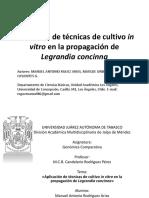 Aplicación de técnicas de cultivo in vitro en la propagación de Legrandia concinna.pptx