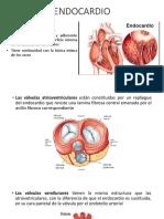 Endocardio