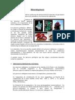 Mineralogénesis