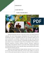 Tugas Mata Kuliah Ornitology