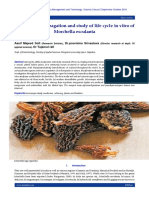 Evaluvation, propagation and study of life cycle in vitro of Morchella esculanta