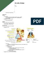 2 - Cavità Nasali, Cavità Orale, Faringe