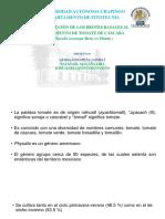 Conferencia técnica de Aureliano Pena