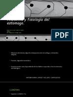 Anatomía y Fisiología Del Estomago