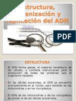 1 Estructura organizacion y replicacion del ADN.pptx