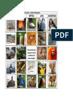 Bingo Escolar Animais Vertebrados Peixes Anfíbios Répteis Aves Mamíferos. São Animais Que Possuem Coluna Vertebral Com Raras Exceções. (1)