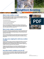 Cat Body Condition Scoring