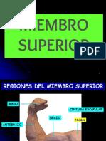 340312474-Miembro-Superior-pptx.pptx