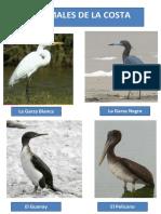 Animales de Costa Sierra y Selva
