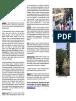 Utilizacion de plantas trepadoras como media sombra - Chaco.pdf