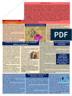 Boletín Psicología Positiva. Año 10 Nº 8