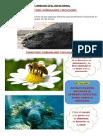 La Simbiosis en El Reyno Animal
