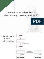 Síntesis de noradrenalina, su eliminación y duración