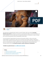 Anemia en Perros - Causas, Síntomas y Tratamiento