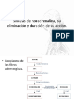 Síntesis de noradrenalina, su eliminación y duración.pptx