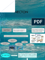 Tema 5. Necton y Neuston.