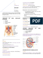 Urinary System Notes