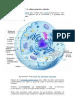 Las células eucariotas animales.docx